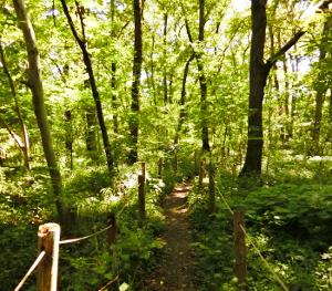 北の離れ 淵の森