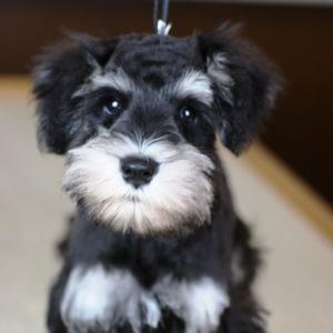 近所の夫婦が愛犬を現在25歳だといって可愛がっているが、どう考えてもそんなに生きられるはずがない。二代目なんですかと尋ねてみたら・・・
