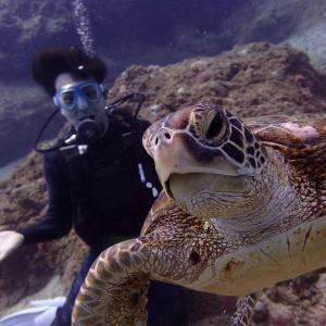 【サイパンひとり旅】マリアナブルーの海でウミガメと戯れよう!~観光編~