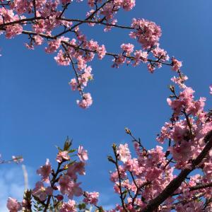 春の無料体験レッスン実施中