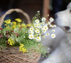 この花を・・・