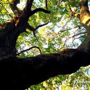 椎の木とあの日