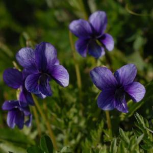 里山の春⑤ …… 背振で出会える花々