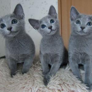 【本日のネタ】本日はにゃんにゃんにゃんの猫の日!猫にまつわる小ネタ・写真をお願いします!