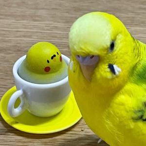 やっぱり黄色が好き??
