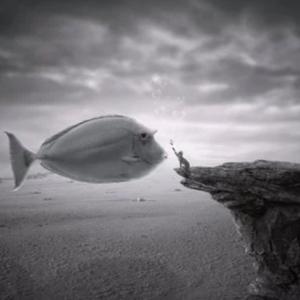 施術内容追記【告知】魚座新月一斉無料遠隔レイキヒーリング