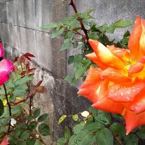父から花が送られた話