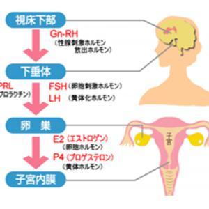 検査②【生理期】ホルモン採血検査(生理2〜4日)