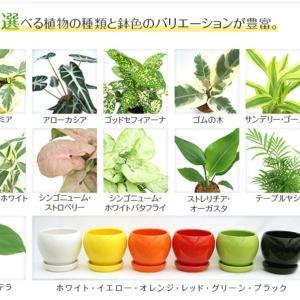 【6月】楽天マラソン購入品♡(エアコン&追加植物)