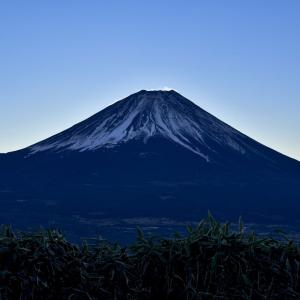 国民に自粛のお願いしか出来ない日本政府→それでもコロナを封じ込めた理由とは!?