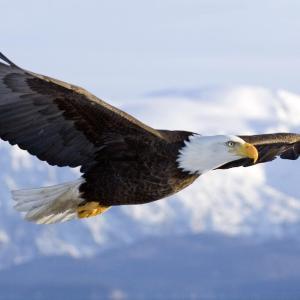飛んでいる鳥に起こされ目が覚めた~♥