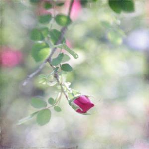 花の命は短くて~♥