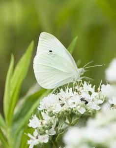 白蝶からのメッセージ ♥