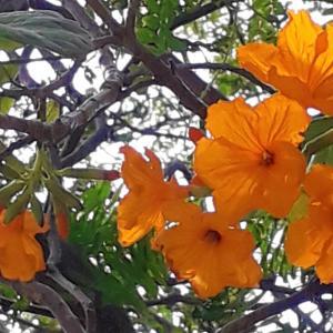 枯れ木に咲く花 ♥
