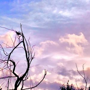 『こころ』夏目漱石~♥~11.23