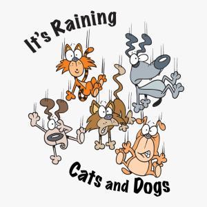 金曜日に英語で一言 ~♡~07.23 『It's raining dogs and cats*』