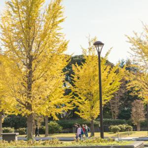 秋の昭和記念公園(前編)