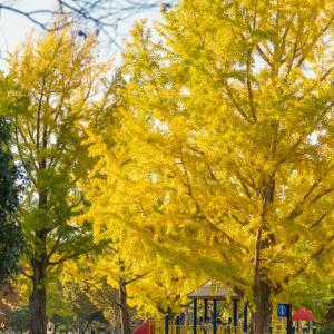 秋の昭和記念公園(中編)