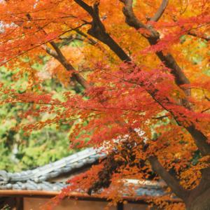 鎌倉の秋① 円覚寺(前編)