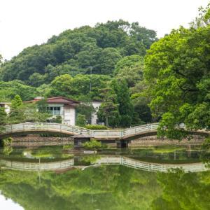 薬師池公園のアジサイと花菖蒲