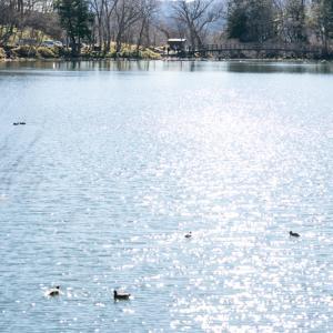 湯ノ湖でポコ散歩