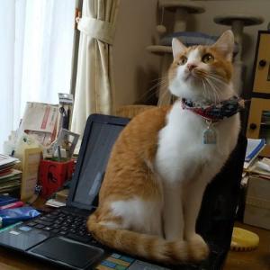 パソコン猫第3号