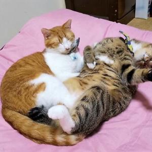 2人の寝姿