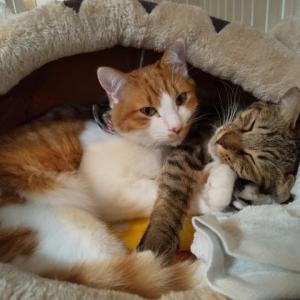 猫ベットの冬支度