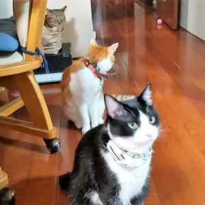 新しい家具と猫たち