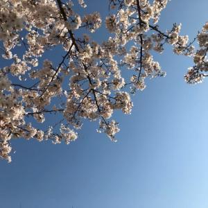 見上げれば   謳歌しようと   桜花  笑