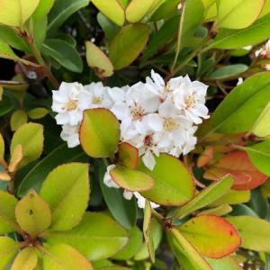 車輪梅😸   蜂蜜🍯カボス 😋   苺摘み🍓