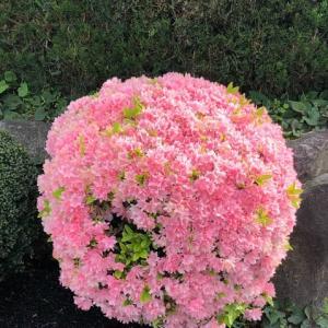 花まるニッ(^^)   花マルの日ニッ😸   ぬりかえた
