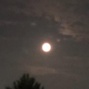 見  秋  照   月並みですが   十五夜ニッ😸(^^)