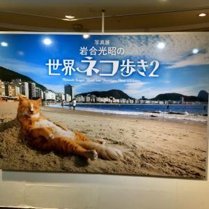 【池袋】かわいい猫に魅せられて『岩合光昭の世界ネコ歩き2』を見に行きました(*´∀`*)