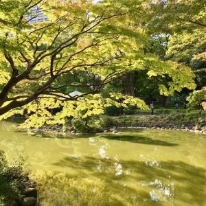 【日比谷】紅葉には少し早かったけれど、秋晴れのなか日比谷公園を散歩するのは気持ちよかったです^^