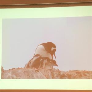 絶滅を救え!ペンギン保護のお話@JICA