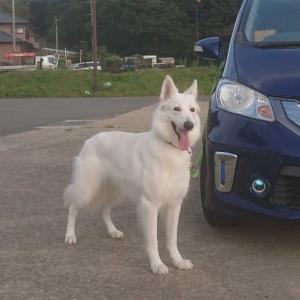 愛美ちゃん♪,2歳半+1週齢です!(^.^)- 3連休