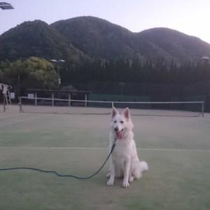 愛美ちゃん♪,1歳1ケ月+1週齢です!(^.^)-② テニス・コート記念日