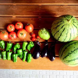 今日は幽霊の日~嫌だった体験~結膜下出血4日後(閲覧注意)~野菜とスイカの収穫~おうちごはん~