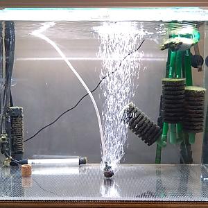 砂利系淡水水槽の立ち上げ方