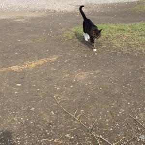 猫、そしてドレッシング