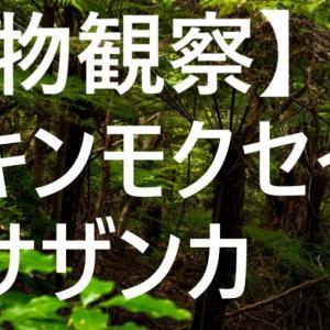 【植物観察】(70日目)初心者が金木犀(キンモクセイ)・山茶花(サザンカ)をベランダで育ててみる