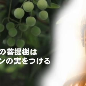 仏陀の瞑想場所の菩提樹には松果体活性化のためのセロトニンの実がなる