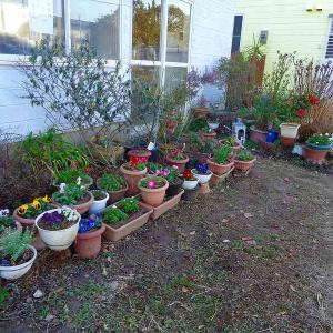 花壇に花を並べました。