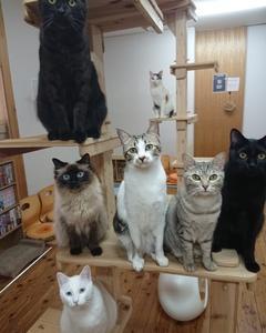 猫カフェナビに掲載されました!