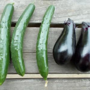 採れたて野菜で…。