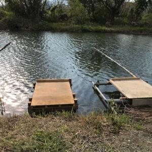 2020年 ヘラブナ釣り その13 下池&中池