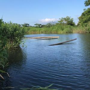 2020年 ヘラブナ釣り 三つ池 大雨の後