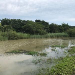 2020年 ヘラブナ釣り 梅雨の合間に(2)
