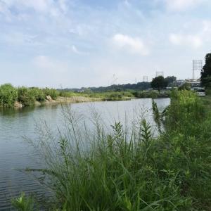 2020年 ヘラブナ釣り 三段の滝 その3 +三つ池